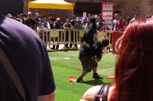 Animal Sport Mallorca